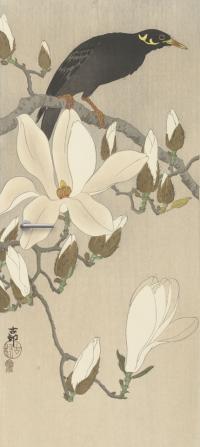 deursticker Beo op magnoliatak